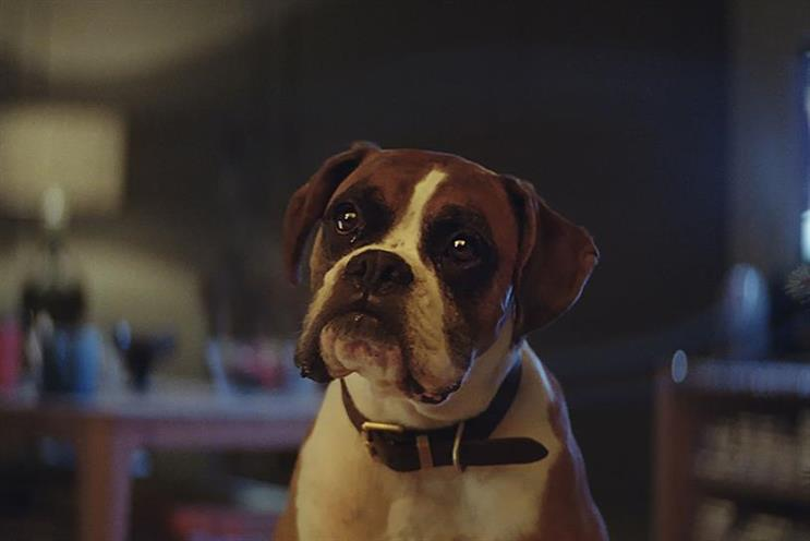 Buster the Boxer: the face of 2016's John Lewis Christmas ad