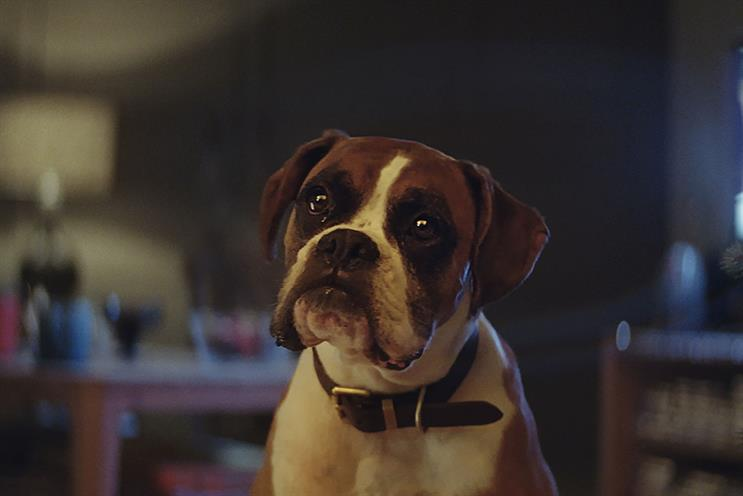 John Lewis: 'Buster the boxer' features a trampolining dog