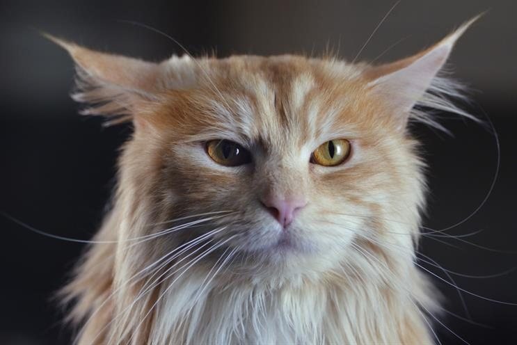 O2: its parent company, Telefónica, is expected to kick off a statutory review in April