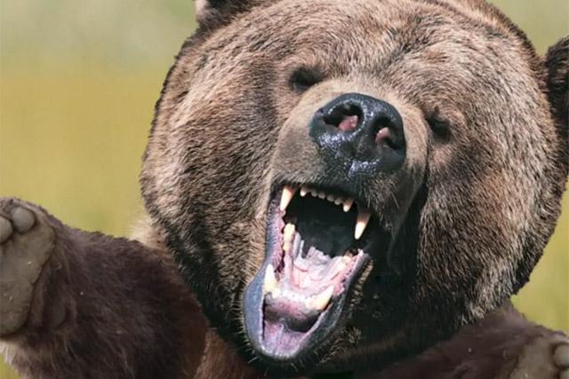 Tuborg: never say no to the bear