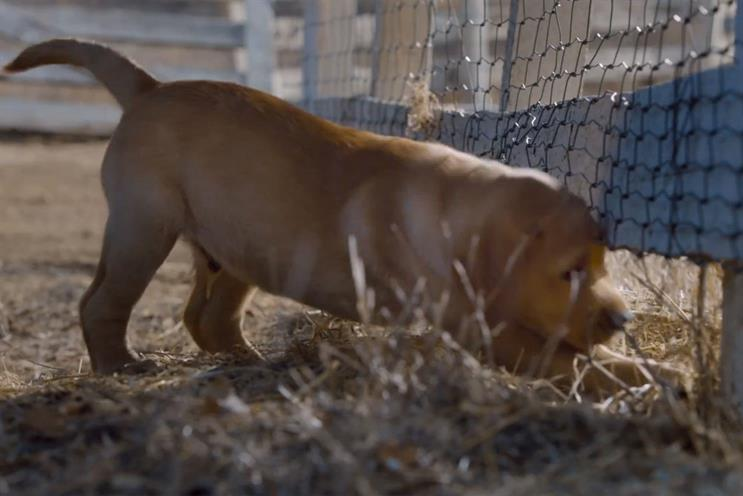 Budweiser: puppy love ad topped the social sharing chart of aired Super Bowl 2014 ads