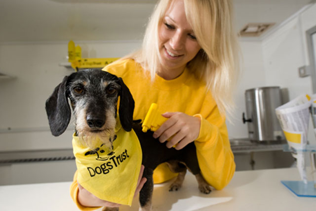 Dogs Trust: charity reveals that new chief executive is to be Adrian Burder