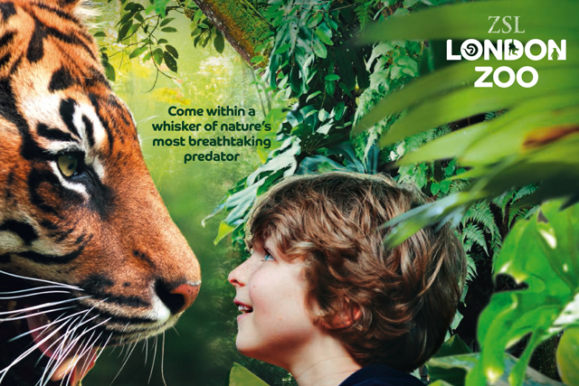 ZSL London Zoo: promotes the opening of its tiger enclosure