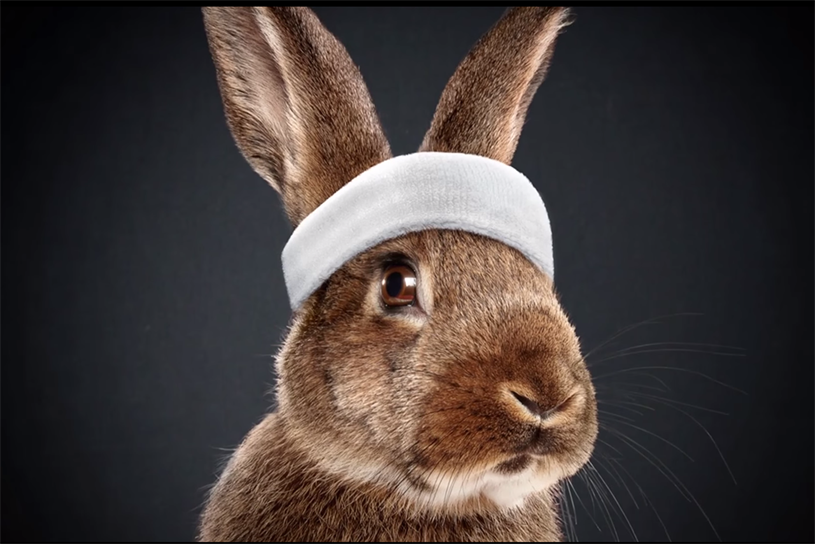 "Campaigns such as Media Markt's ""rabbit race"", where live bunny-betting beat World Cup viewership, show the difference that creative media thinking brings to the mix."