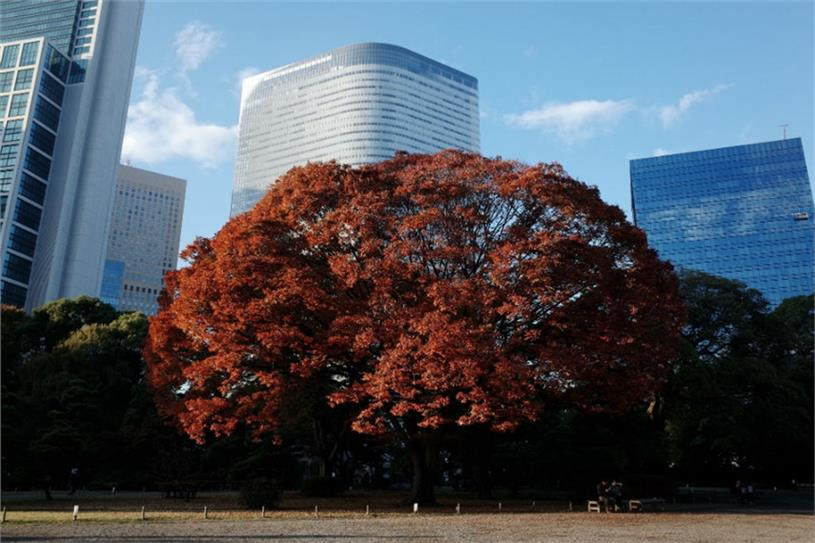 Dentsu's Tokyo headquarters seen from the Hamarikyu Gardens.