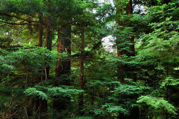 Conservation: Apple hopes to protect US working forests. (Photo via The Conservation Fund)