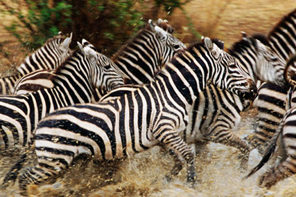 National Geographic: Great Migrations series