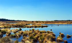 England Peat Strategy to be published in next four months - but consultation 'falls well short' - Horticulture Week