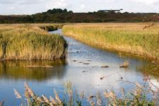 Online platform to enable water sharing between suppliers in Suffolk - Horticulture Week