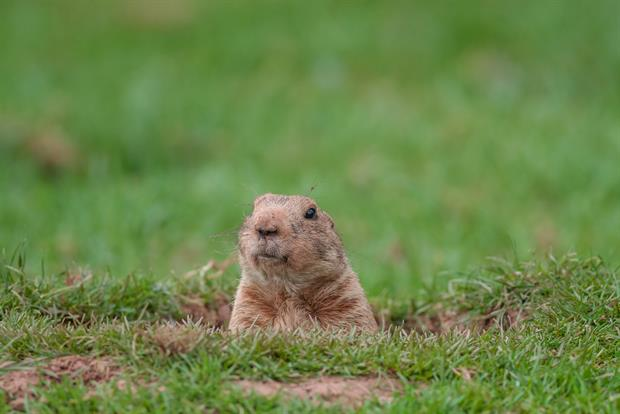 EVERY DAY IS THE SAME:  Has your job evolved over the years? Have you taken on more responsibility or expanded your role? Without new challenges, every day blends into the next. If you feel like every day is Groundhog Day, it may be time to make a change.