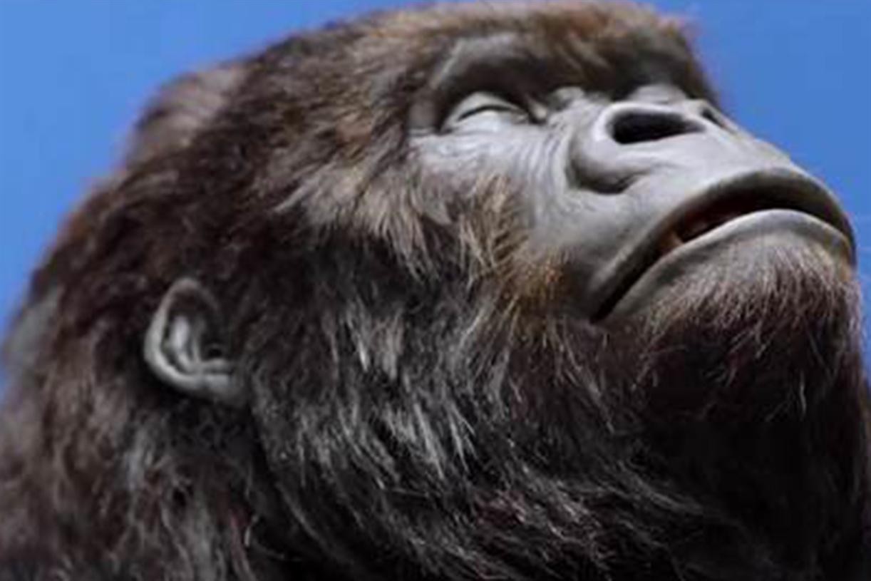 Gorilla analysis essay ad cadbury - royaltobaccoandcigar.com