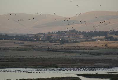 Loch Leven, a RSPB project part funded by the Biffa Award