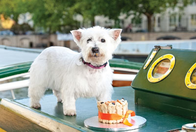 Charity is looking for a canal-loving canine