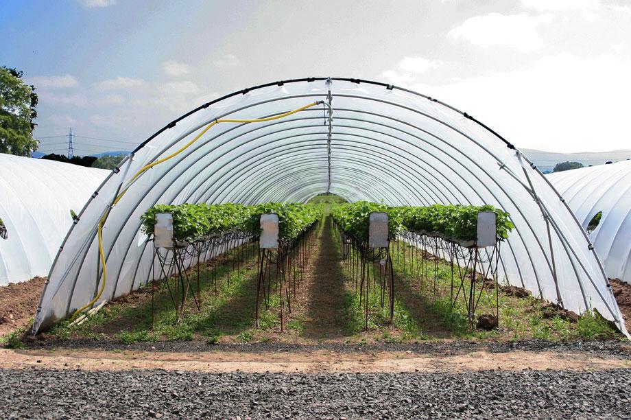 A Co-operative Group farm