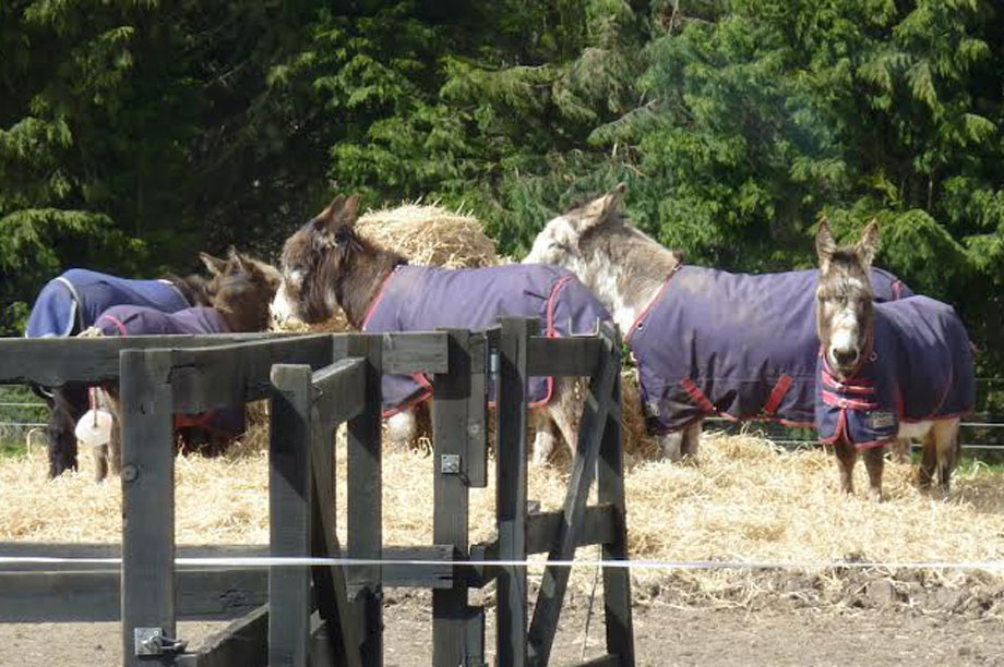 Rescue animals at the Redwings Horse Sanctuary