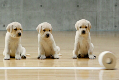 Puppy power: Labradors uniting brands