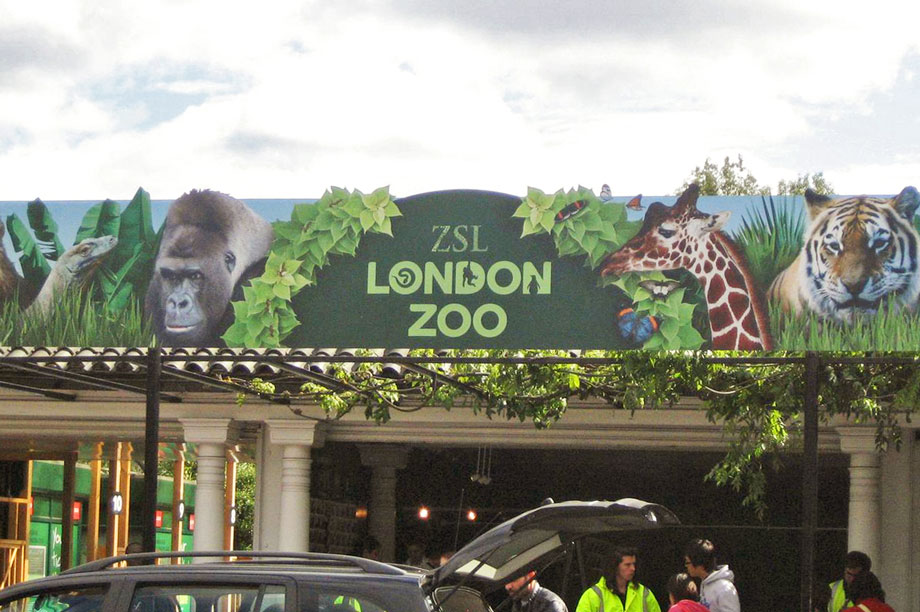London Zoo: seeking unpaid graduate