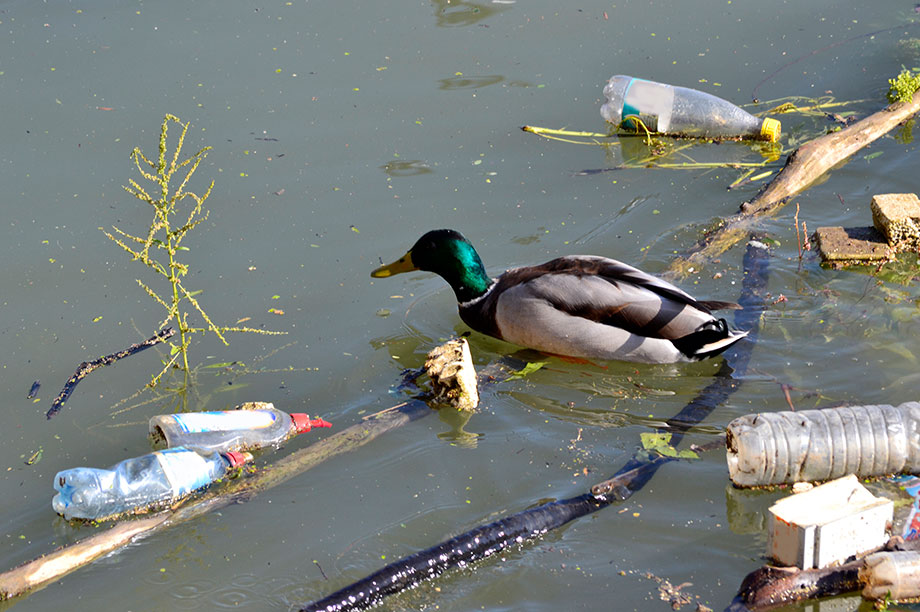 Charities that work to reduce plastic pollution can apply (Photograph: Getty Images)
