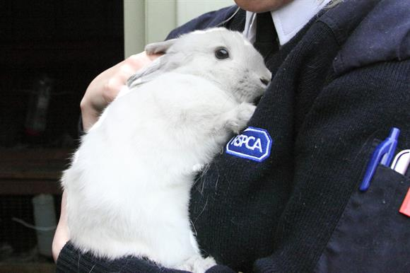 RSPCA: accused by union