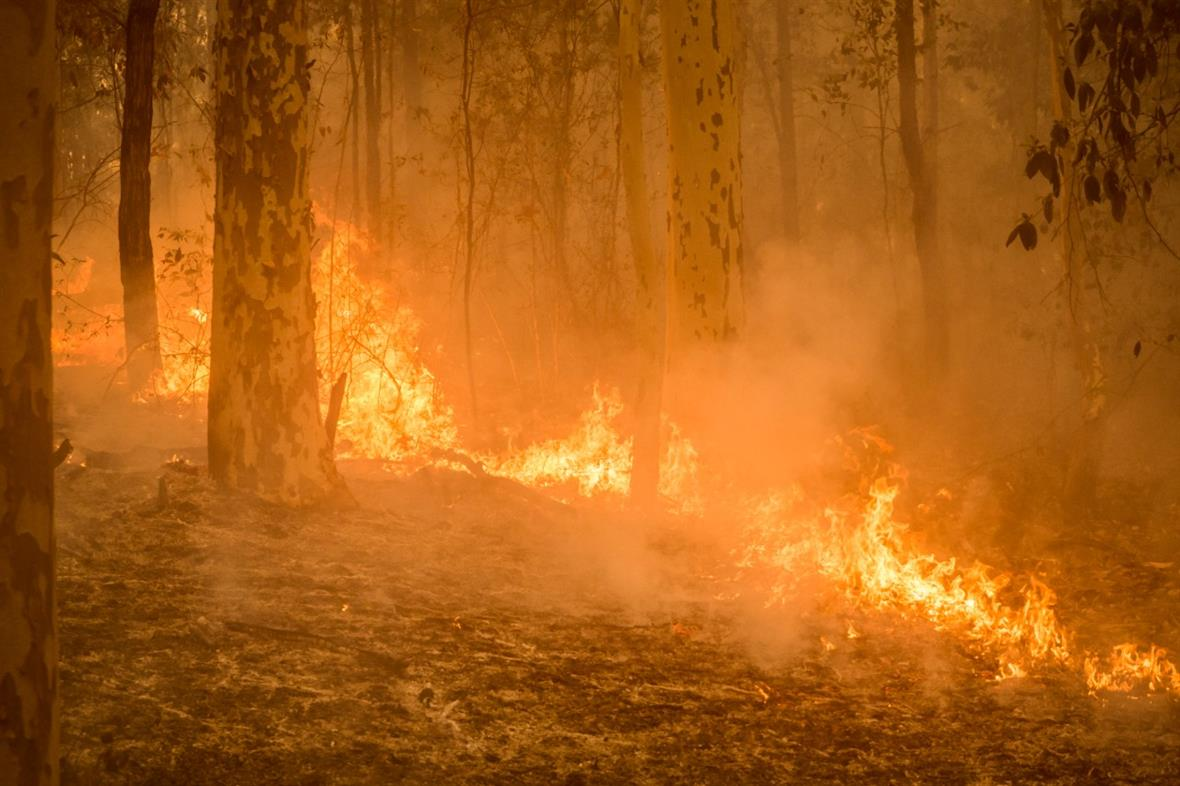 (Photograph: Bryce Harper/WWF-Australia)