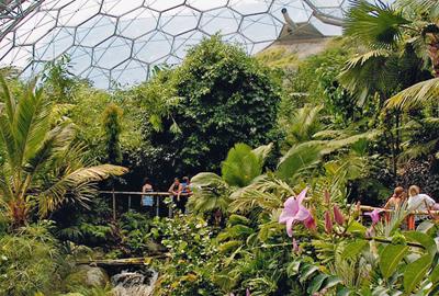 Rainforest Biome, Eden Project