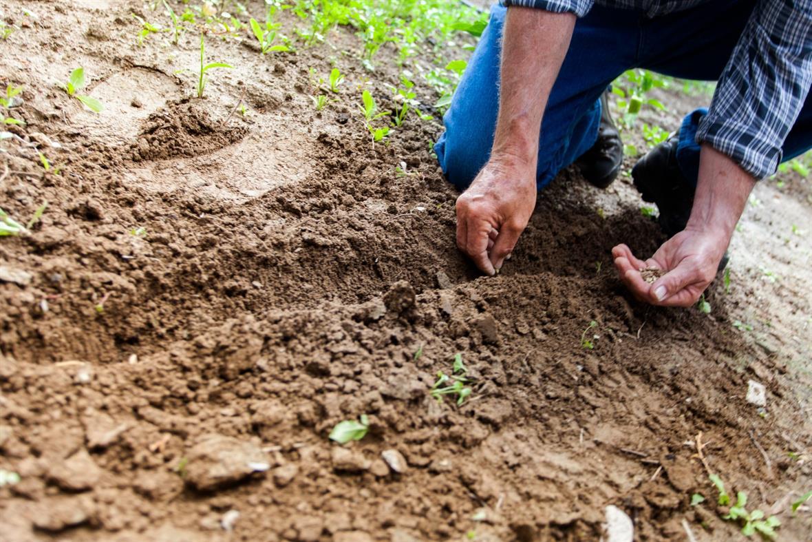 Gardening can be part of social prescribing (Photograph: Binyamin Mellish via Pexels)