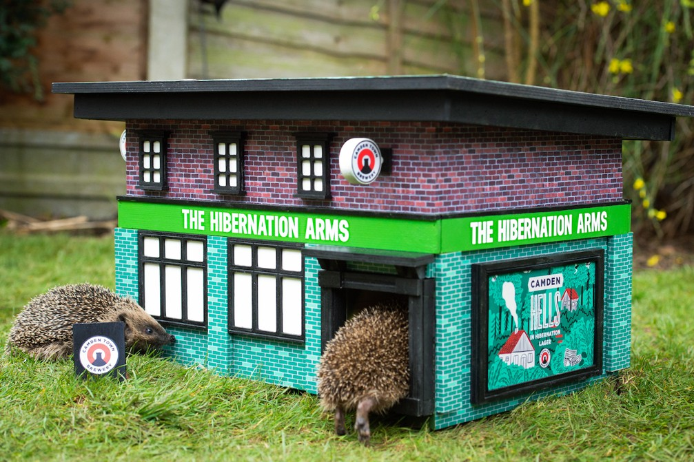 The Hibernation Arms