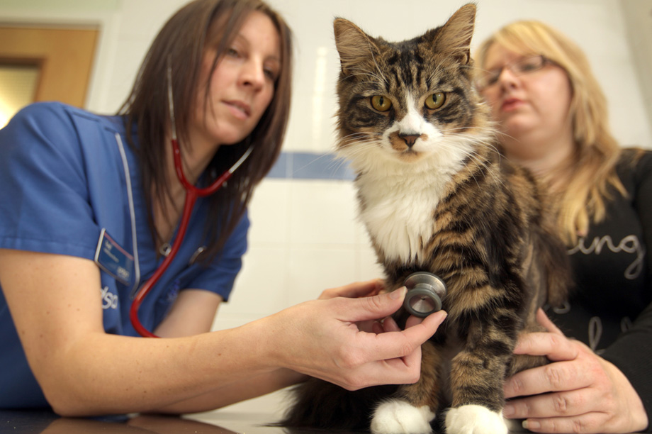 A substantial proportion of PDSA's donations come from those who have had personal interaction with the charity