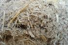 Albioma's under-construction biomass plant survives hurricanes