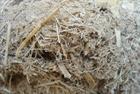 Albioma signs coal-to-biomass conversion loan