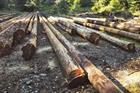 Eqtec wins US biomass build deals