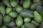 Avocado aficionados heading to New Zealand