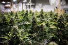 Fyllo launches marketing tech platform for cannabis