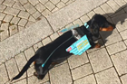 Case study: Swindon sausage dog steals the show and turnout increases in local authority voter ID pilot