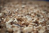 Eqtec to buy planned-cogeneration biomass plant