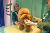 Klarna creates 'pup-up' with dog-grooming services
