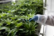 From reefer madness to wellness tourism: the future of the cannabis industry