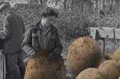 Tyrrells: St Luke's debut work introduces 'Tyrrellbly tyrrellbly tasty' slogan