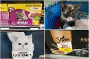 Cat food: Whiskas, Sheba, Purina Gourmet