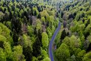 Policy briefing: What's in the new EU Forest Strategy?
