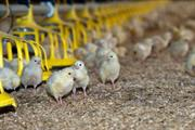How the rise in intensive farming is putting pressure on the environment