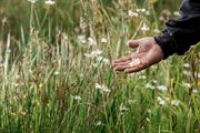 Mitie backs no mowing campaign to help biodiversity