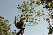 Council reveals extent of highway tree felling due to ash dieback
