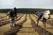 Minister backs special forestry status for Northumberland