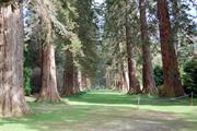 Benmore Botanic Garden's giant redwoods under threat