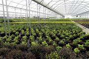 Tree and shrubs - nursery market