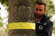 Manchester's trees provide ecosystem services worth £33.3m a year, survey finds