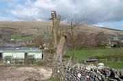 Magistrates issue £2,000 fine over national park tree felling