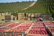 """This season's UK apples """"the most colourful this century"""""""
