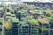 Farplants sees turnover rise